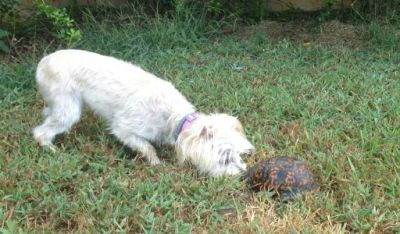 Are-you-barking-at-turtles