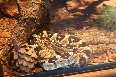 Les serpents du Musée, toujours derrière la vitre du vivarium !