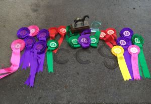 Competition Dressage show jumping
