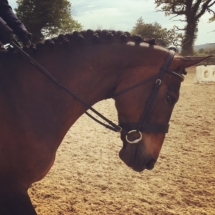 Horse_Showjumping