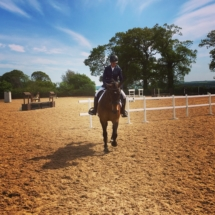 Horse_show_jumping_training