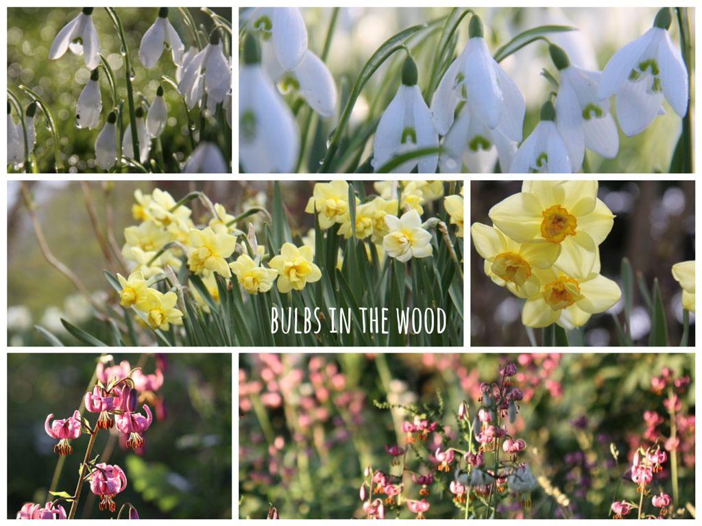 Woodland-Bulbs