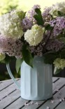 Lilac Blossom with Viburnum opulus 'Sterile'