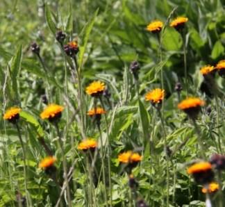 Wildflower Centre 03