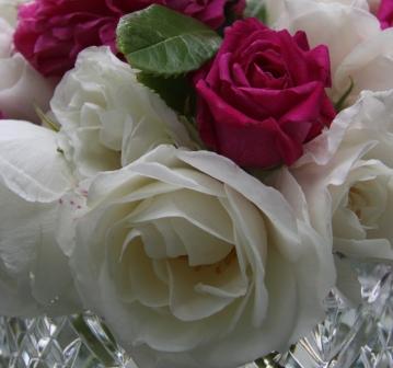 English Roses 02