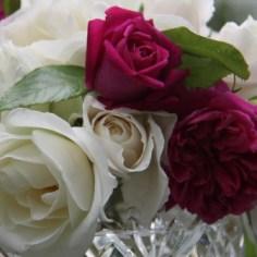 English Roses 03