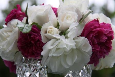 English Roses 05