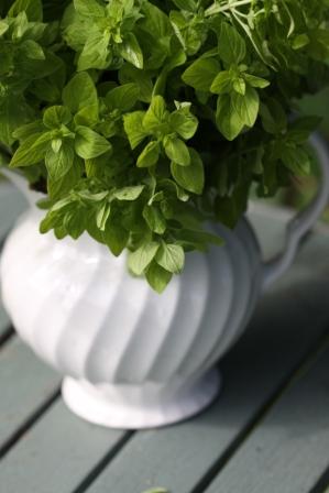 Drying Herbs 01