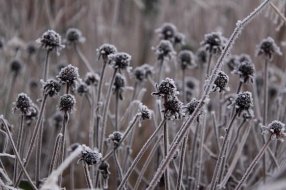 November Seed Heads