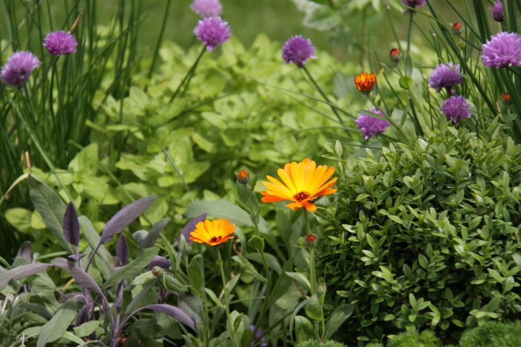 Herb Garden 02