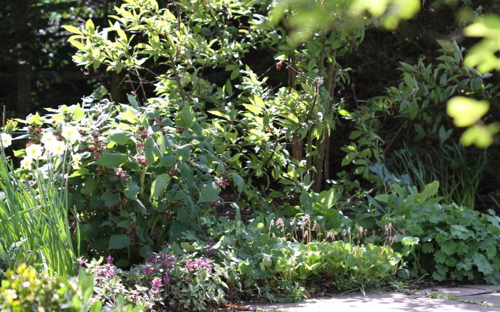 Spring Garden 03