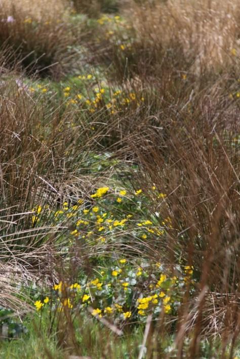 Marshy Field 02