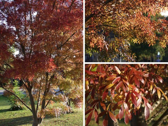 Autumn-Colour-Collage