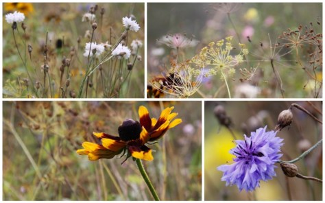 wildflower-patch-october