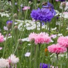 Wildflowers-Summer