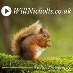 WillNicholls.co.uk-jpeg