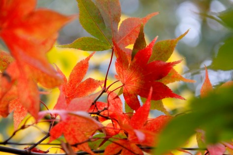acers 032