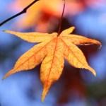 leaves & berries 075 - Copy - Copy