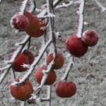 Frosty-Apples-Thumbnail