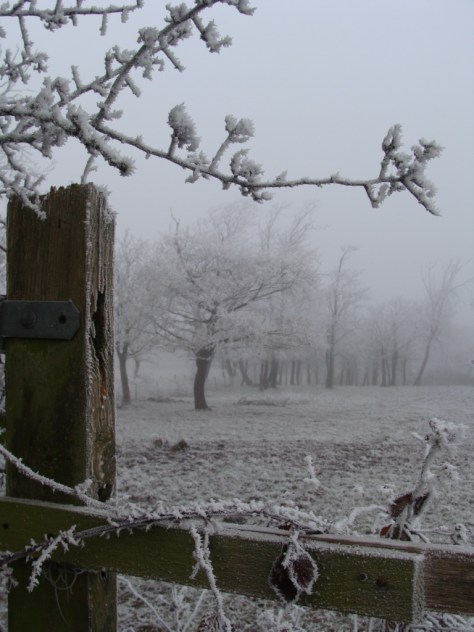 Frosty-View