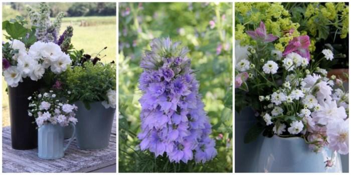 6 Monday Flowers