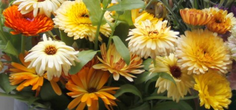 Calendula-Mixed
