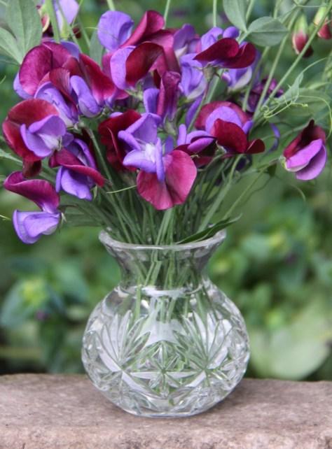 Cupani-Vase