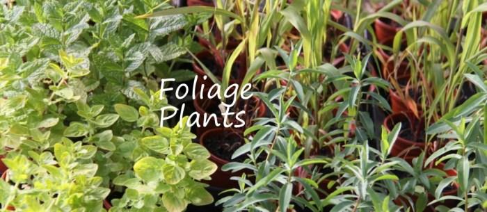 Foliage-Plants