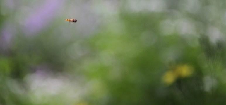 hoverfly header