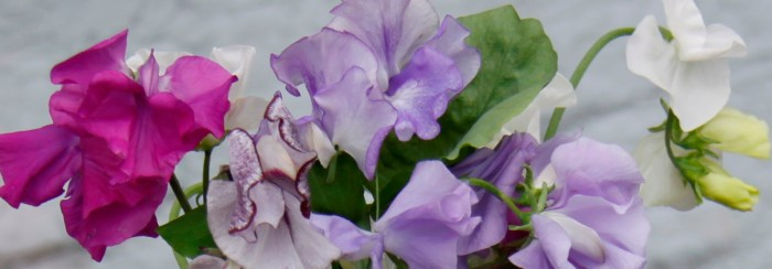 Sweet-Peas-Header