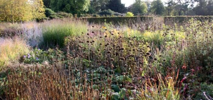 Perennial Meadow.