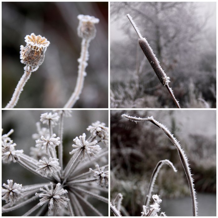 Frozen-Plants-Collage