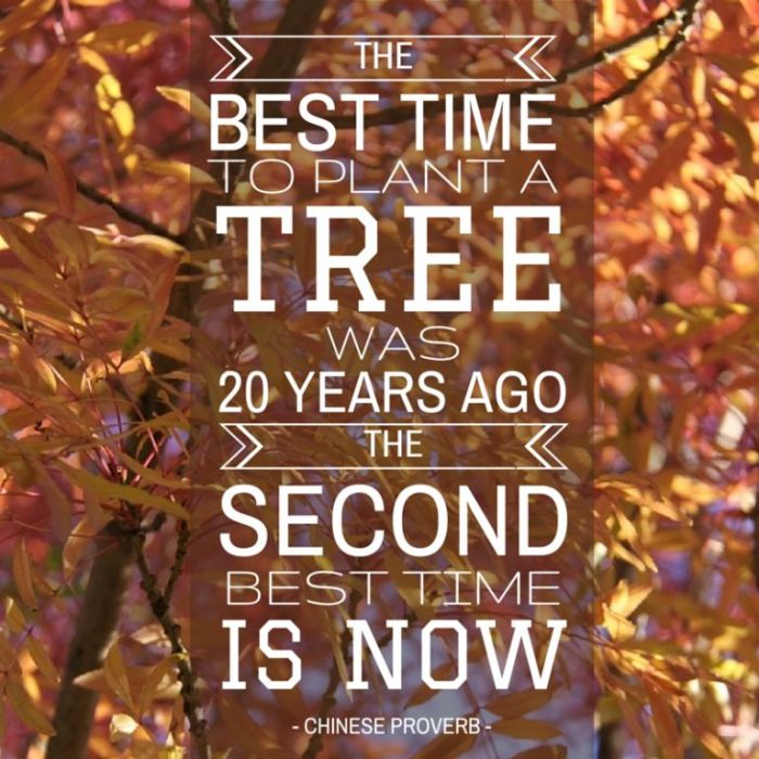 Autumn Tree JPEG