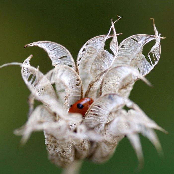 Ladybird-Hiding