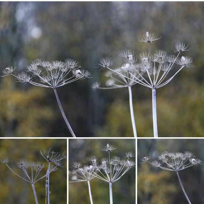 Seedheads-JPEG