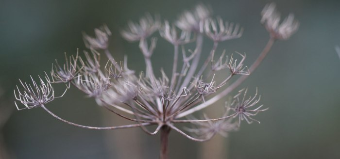 Fennel-Feature