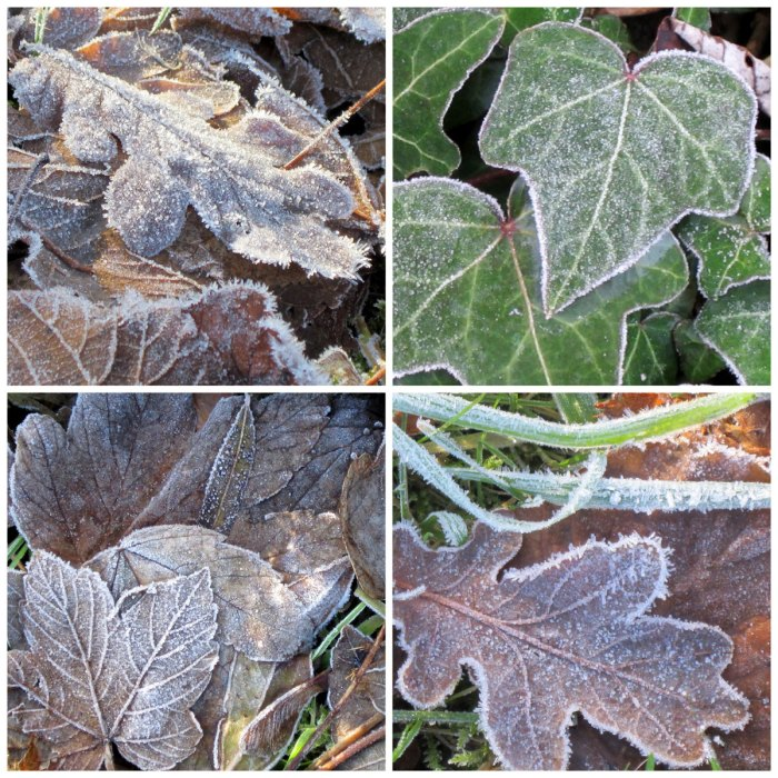 Frozen-Leaves