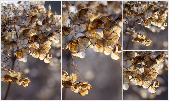 Hydrangea-Collage-Landscape