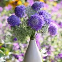 Grow Annuals from Seed