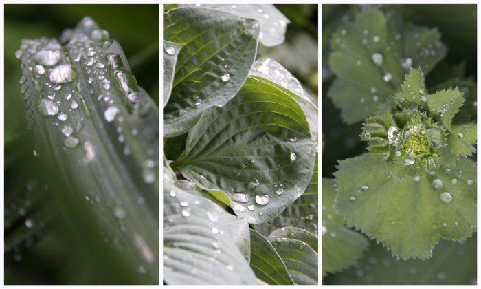 Foliage-Collage