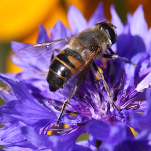 Insects-need-Wildflowers