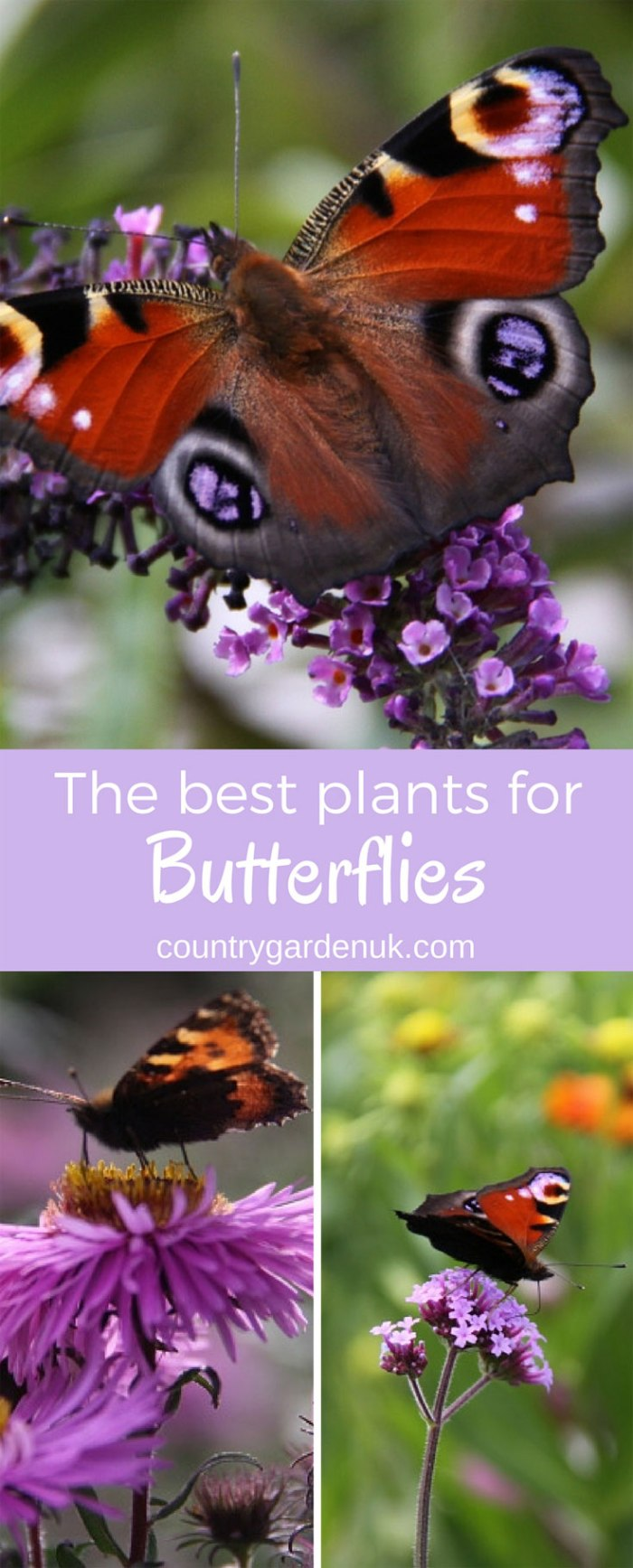 Butterfly-Plants
