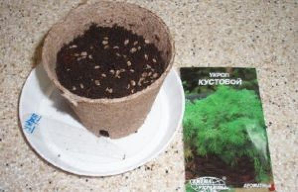 Субстрат для выращивания укропа зимой на окне