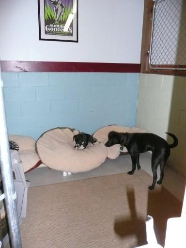 kennel2