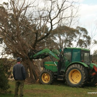 The Country Way To….. Remove Trees