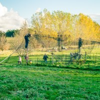 Netting The Orchard