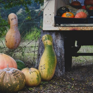 How To Store Pumpkins So They Last A Long Time
