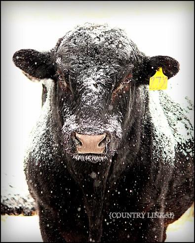 Winter Coat 101