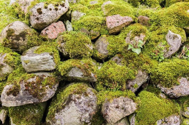 wabi-sabi: Arriva dall'Oriente ma non c'entra nulla con il giardino zen e con l'arredo minimal degli spazi esterni di matrice nipponica. Si tratta di una visione estetica che si fonda sull'accogliere la transitorietà delle cose