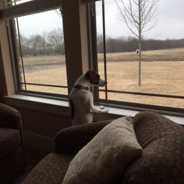watching birds and tractors